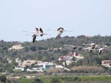 Birds in the Algarve